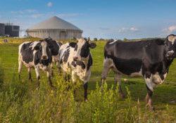 Bloemendaalzetstappen-biogas